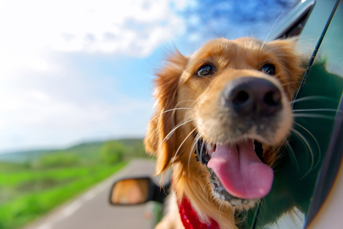 Moving to a New House in London with your Dog